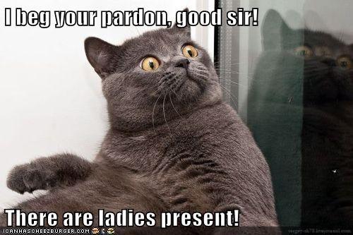 beg Cats ladies pardon rude - 5912076544