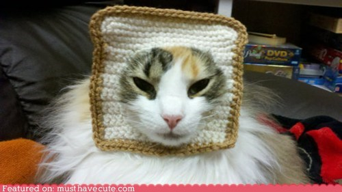 accessory bread cat Crocheted photo op - 5912140288