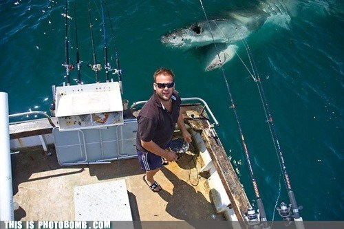 animal Animal Bomb boat fishing shark - 5912273664