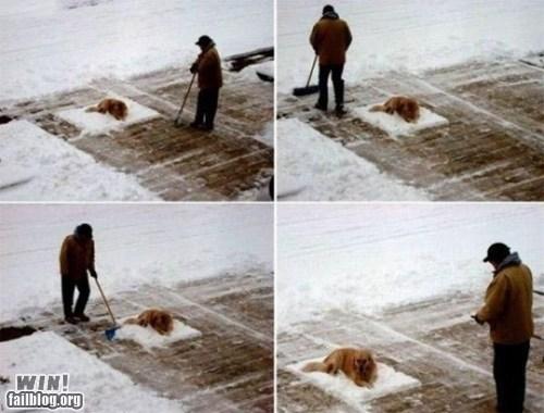dogs lazy pets shovel snow winter - 5912359168