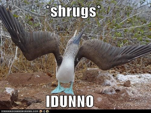 bird booby dont-know dumb shrug stupid - 5912476928