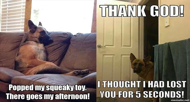 funny dogs, animals, memes