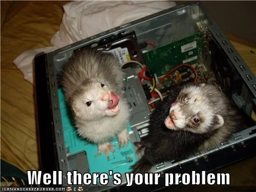 computers,ferrets,problem,technology,theres-your-problem
