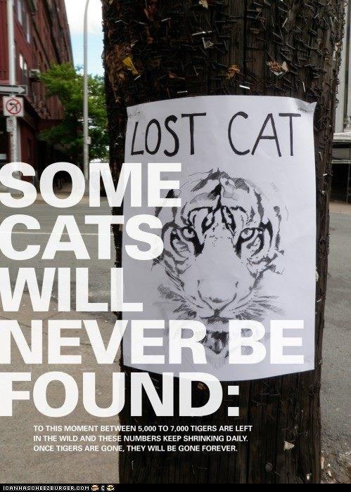 big cats Cats preservation signs tigers