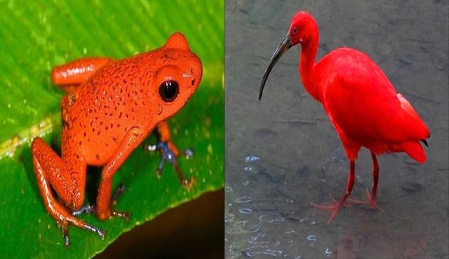 red animal photos photos animals - 5913093