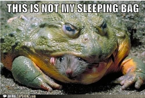 eat food frog mouse nom sleep sleeping bag sleepover