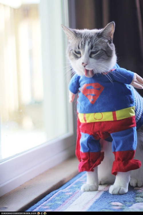 Cats,clothing,costume,dressed up,superheroes,superman