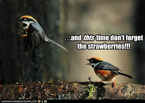 birds fighting forget marriage relationships strawberries yelling