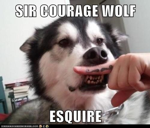 Courage Wolf dogs funny meme siberian husky - 5914259712