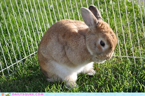 bashful,birthday,bunny,grass,pet,reader squees,waffles