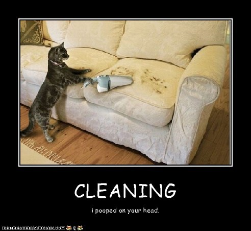 CLEANING i pooped on your head.