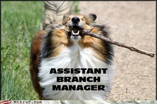 Assistant branch manager,business dog,dogs,fetch