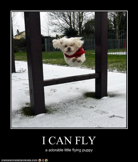 I CAN FLY a adorable little flying puppy