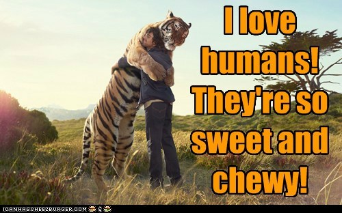 chewy,eating people,hug,humans,love,sweet,tiger