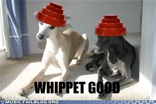 Devo,dogs,pun,whip it,whippet