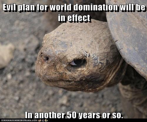 insanity tortoise - 5915864064