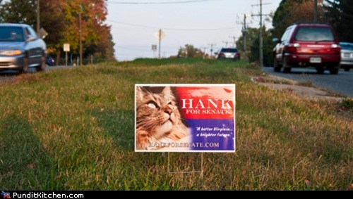 Cats Congress hank the cat news political political pictures politics senate virginia - 5915911936