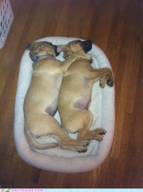 bed cuddle dogs puppies reader squees sleep - 5916028928