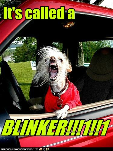 best of the week,chinese crested,dogs,funny,Hall of Fame
