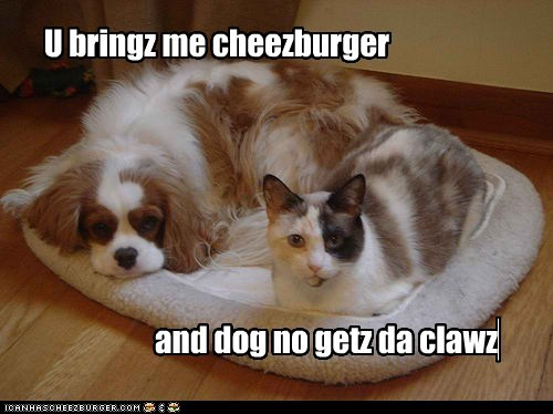Cheezburger Image 5916708608