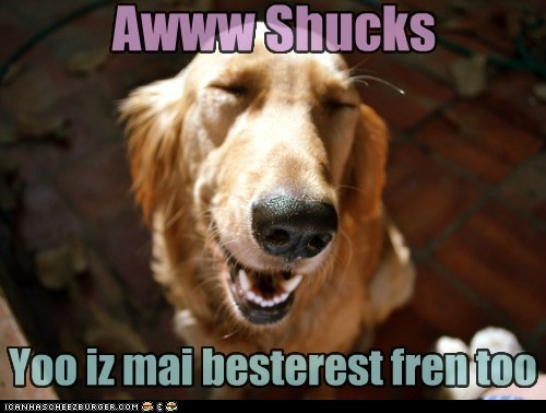 best of the week cute dogs funny golden retriever Hall of Fame - 5916935680