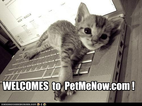 advertisement,caption,cat,Cats,kitten,laptop,me,now,pet,petting,website,welcome