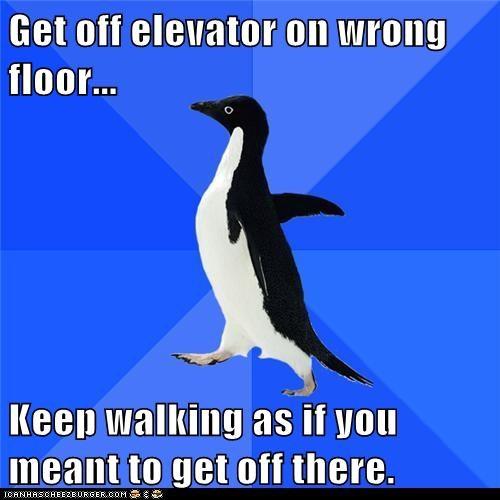 Awkward elevator elevators Memes penguins socially awkward penguin stairs - 5917140736