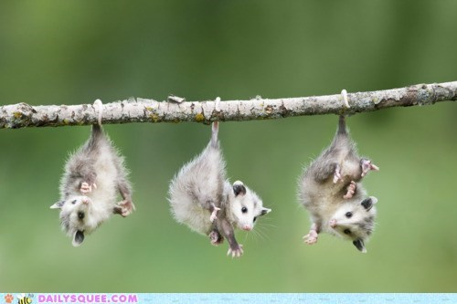 Babies creepicute creepy hang opossums tails