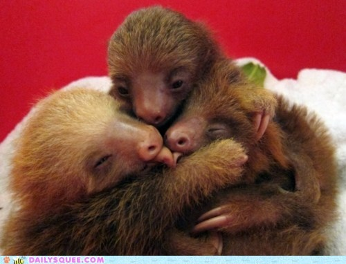 baby animals KISS make out sloths tongue - 5917286656