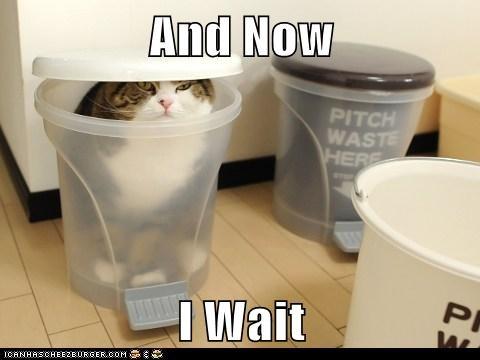 caption Cats maru now wait waiting - 5917397248