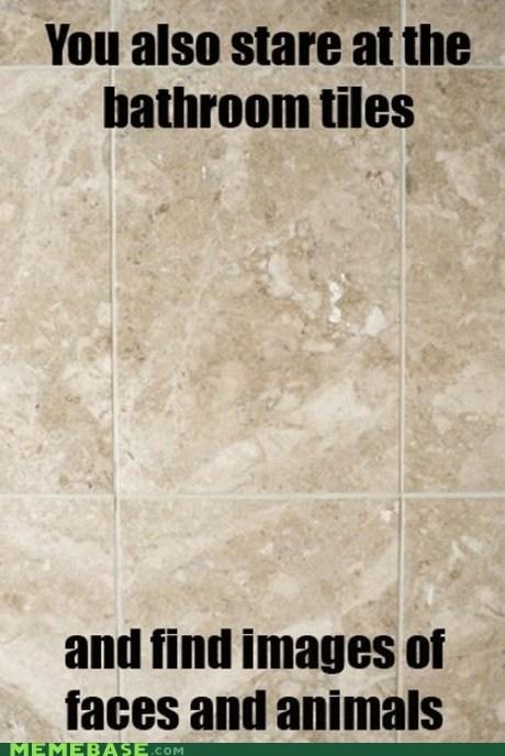 animals bathroom Memes stare tiles - 5917568000