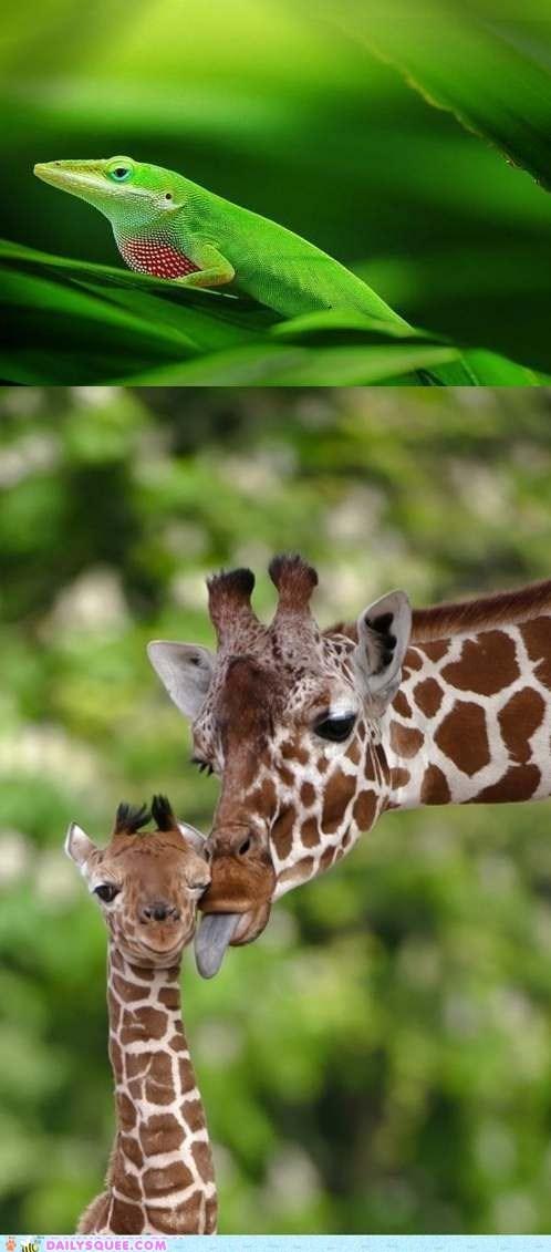 anole Battle giraffes lizard squee spree tall - 5917978368