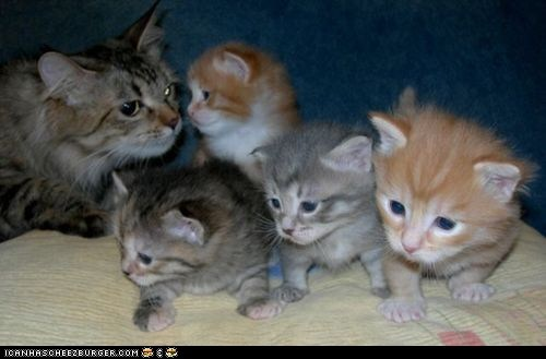 cyoot kitteh of teh day,family,kitten,lots of cats,mama,mom,newborns