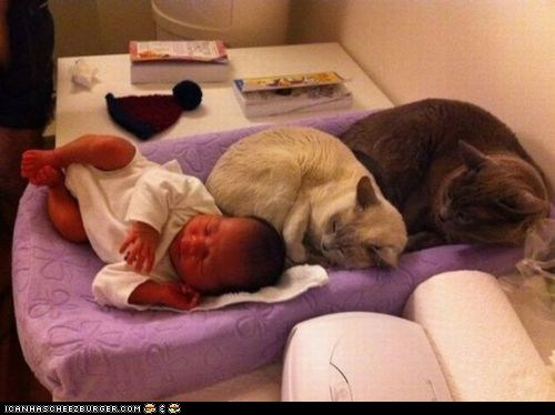 Babies cyoot kitteh of teh day hoomins in a row kids one of these things sleeping two cats - 5918199808