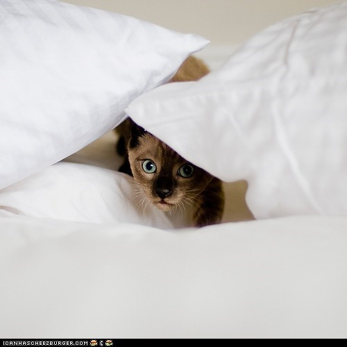beds,cyoot kitteh of teh day,hiding,lurker,lurking,peeking,pillows