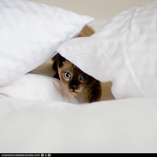 beds cyoot kitteh of teh day hiding lurker lurking peeking pillows - 5918202624