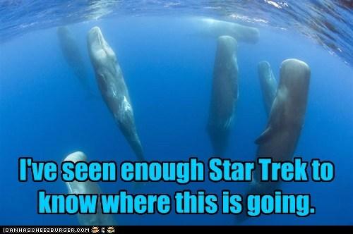 beam me up floating Star Trek water whales - 5918803456