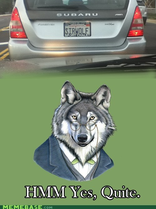 IRL license plate quite seattle artist sir-courage-wolf-esq - 5919051264