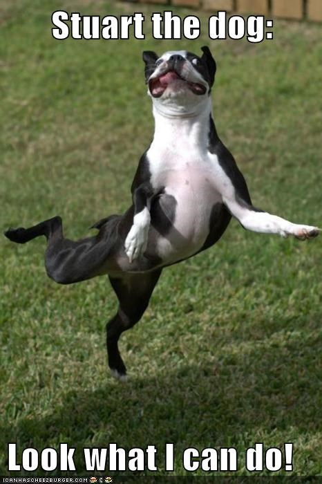 best of the week boston terrier funny Hall of Fame - 5919299840