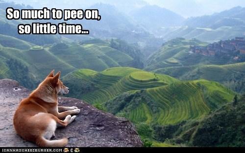 dogs funny mix shiba inu - 5919420928