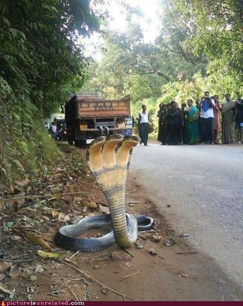 heads hydra snake triple wtf