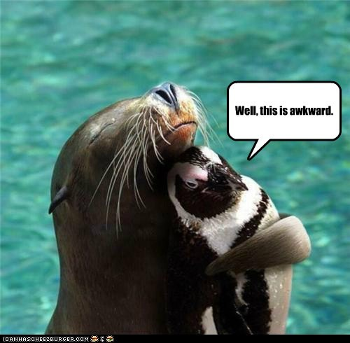 Awkward,food,hugging,hugs,penguins,sea lions,seals,uh oh