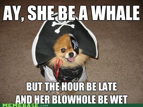 dogs fatty mcfatfat Memes Pirate sex whale - 5920483072