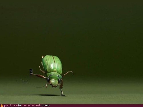 break dancing,bug,Music,wtf