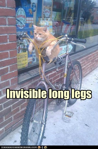 bike,FAIL,invisible,legs,long,reaching,short,tabby,too