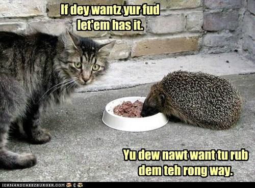 advice food hedgehog noms pun rub stealing way wrong - 5921095168