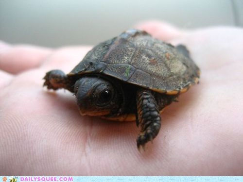 beak eyes hand hands pet squee tiny turtle turtles