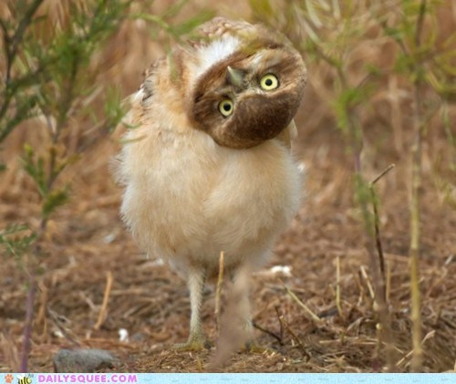birds confused head Owl owls turn what - 5921230336