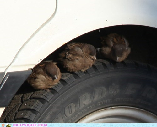 birds,car,nap,shade,sleep,tire