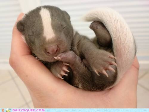 badger claws hand hands paws skunks sleeping squee whatsit - 5921450752
